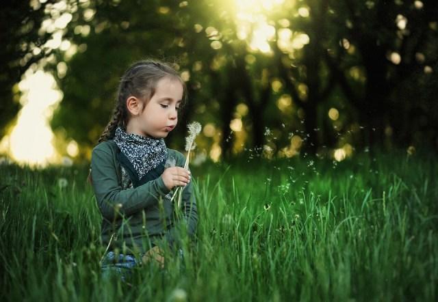 子, タンポポ, 子供, 春, 自然, 草, 夏, 女の子, かわいい, 少し, アウトドア, 花, 人