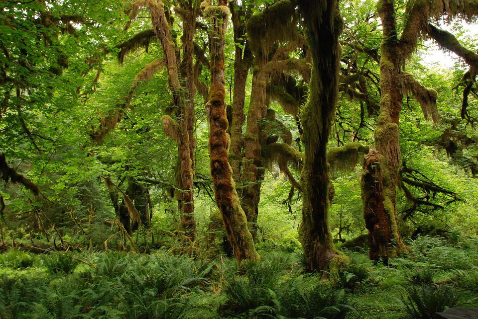 Free photo Nature Landscape Green Forest  Free Image