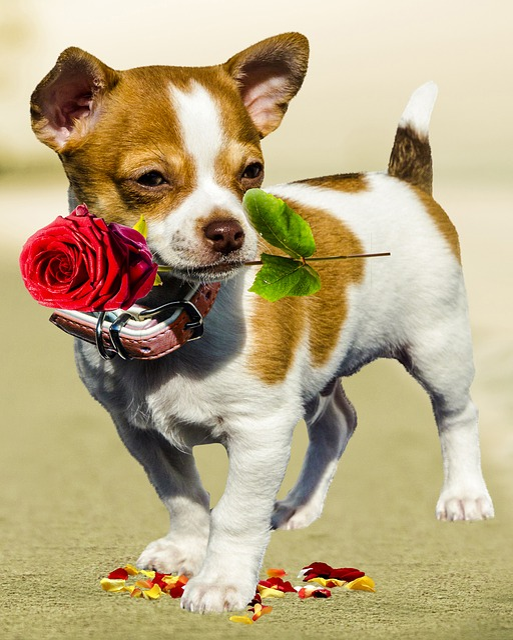 Free Photo Dog Rose Birthday Greeting Card Free