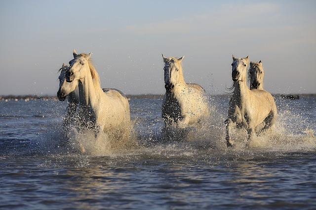 Pferde Herde Pferd 183 Kostenloses Foto Auf Pixabay