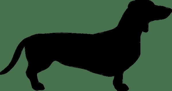 dog dachshund breed free vector