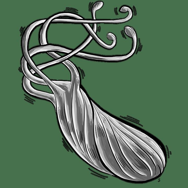 Bacteria Bacterium Heliobacter · Free image on Pixabay
