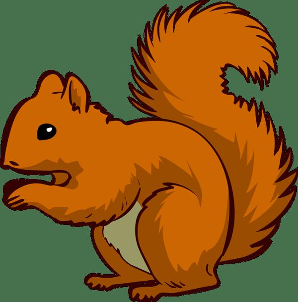 free vector graphic squirrel