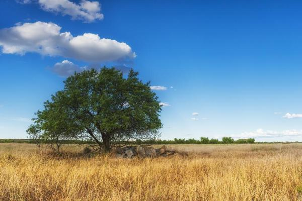 free tree landscape nature