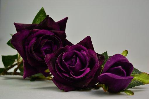 700 purple rose wallpapers