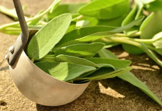 Salvia, Le Erbe, Erbe Culinarie, Sano, Erbe Tea, Salute