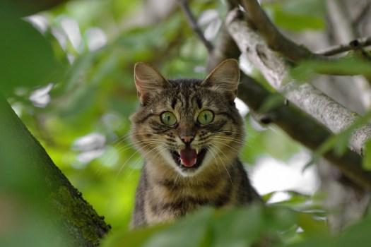 Gatto, Aggressione, Emozioni, Paura, Sorpresa, Ira