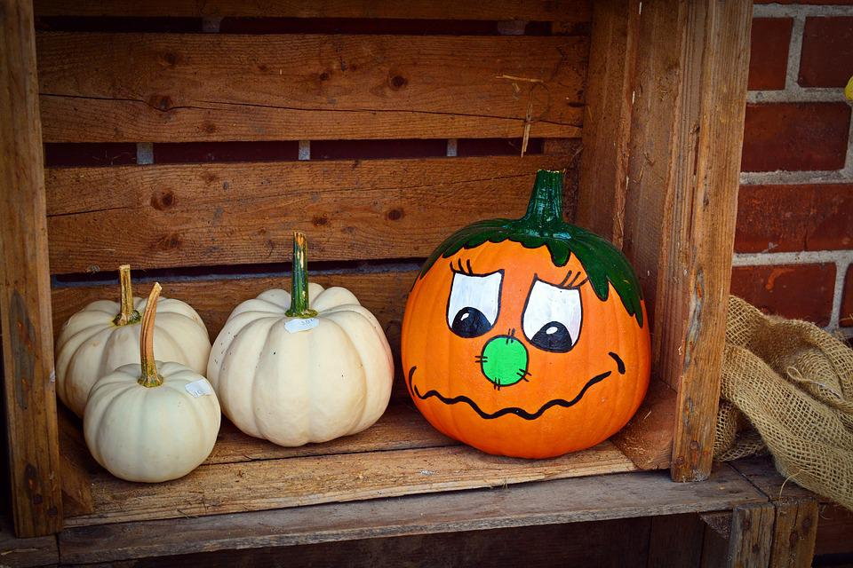 Free Cute Monkey Wallpapers Pumpkin Funny Painted Harvest 183 Free Photo On Pixabay