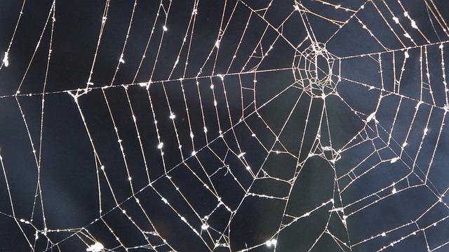 Free Wallpaper Downloads For Fall Cobweb Night Smoke 183 Free Photo On Pixabay