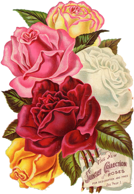 Red Rose Vintage Free Image On Pixabay