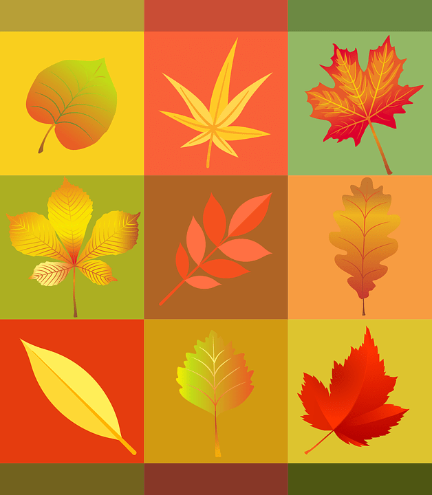 Fall Autumn Wallpaper Free Vector Graphic Autumn Leaves Colorful Free Image
