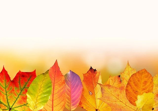 Free photo Autumn Leaves Colorful  Free Image on