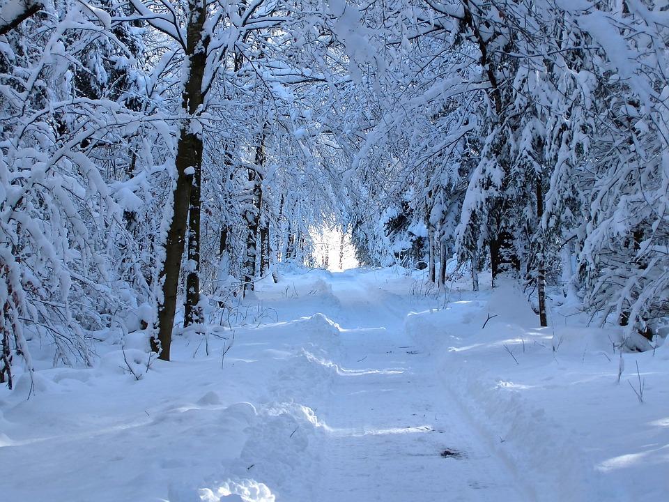 Snow Forest Path Walk  Free photo on Pixabay