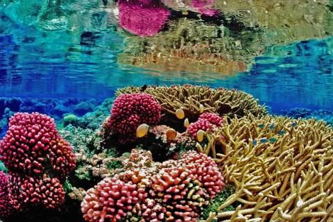 Les coraux, menacés par l'acidification de l'océan (CO2)