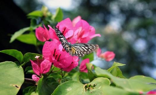 Fiore, Cielo, Estate, Verde, Primavera, White, Campo