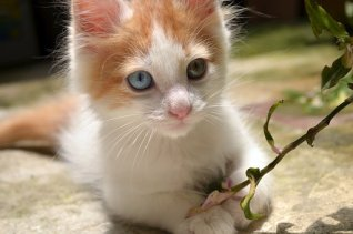Awesome, Beautiful, Blue Eyes, Cool