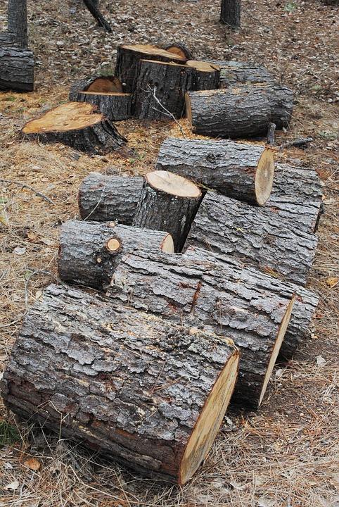 tree logs lumber free