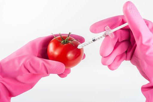 変更, トマト, 遺伝子組み換え, 食品, インジェクション, 遺伝的, 注射器