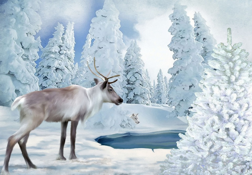 Free Illustration Freezing Time Reindeer Wolf Snow