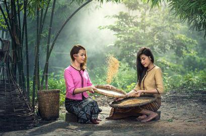 Rice, Women, Sitting, Harvest, Sow