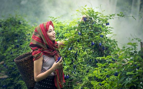 農業, カンボジア, 文化, 農家, 女性, 女の子, ハーブ, インドネシア語
