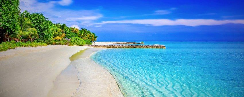Beach, Sandy Beach, Paradise, Palm Trees