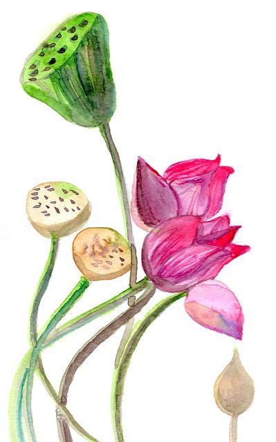 Free illustration Lotus Beautiful Watercolor Yoga