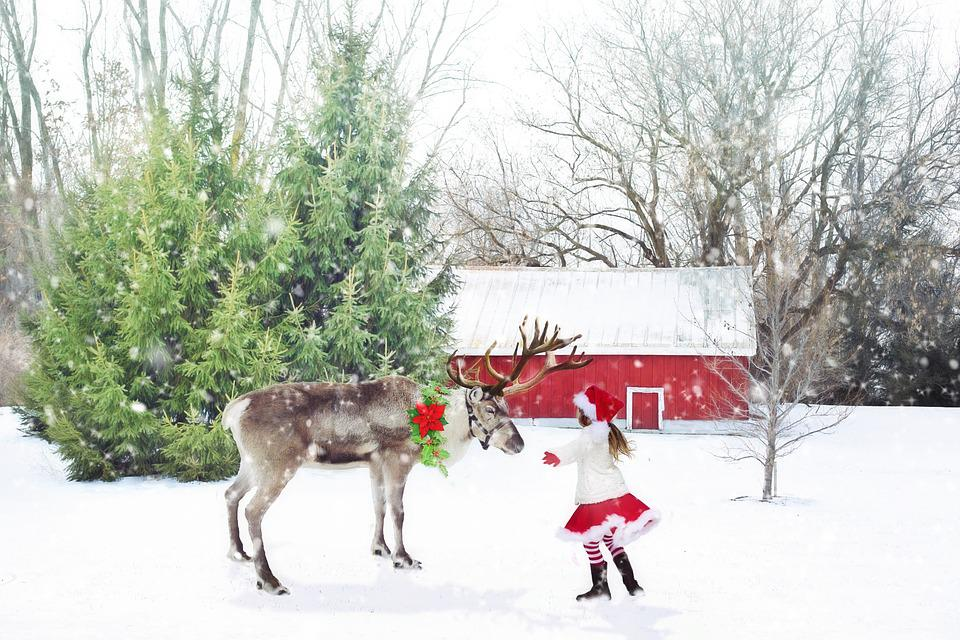 Free Photo Christmas Scene Reindeer Free Image On