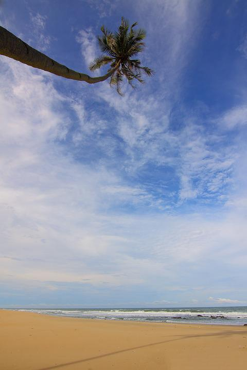 Gambar Siang Hari : gambar, siang, Beach, Clouds, Coconut, Photo, Pixabay