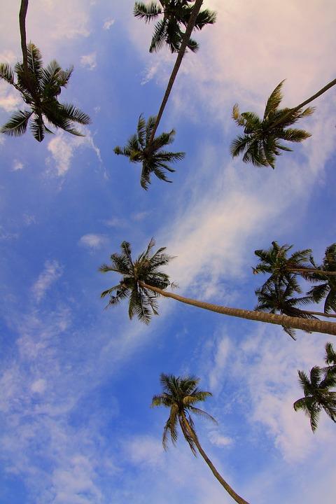 Gambar Siang Hari : gambar, siang, Daylight, Angle, Photo, Pixabay