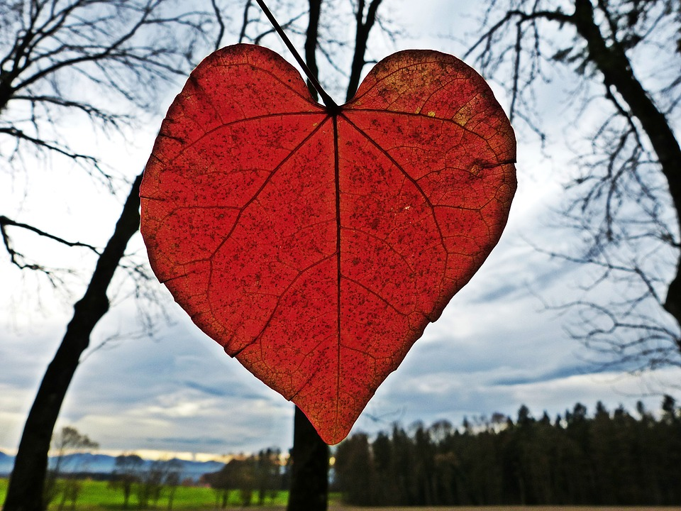 Leaf Heart Red Free Photo On Pixabay