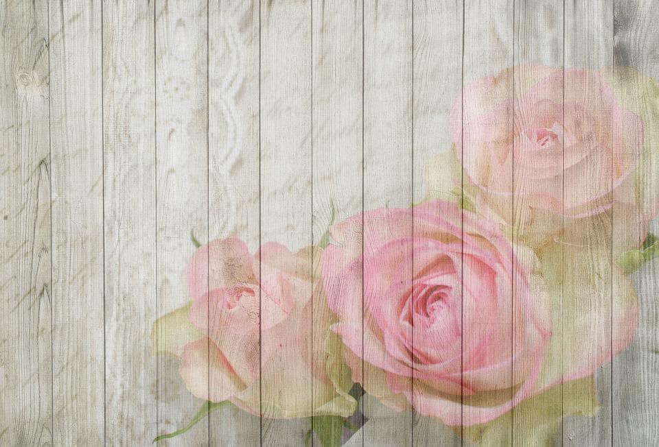 Girls Bedroom Wallpaper Border On Wood Rose Bloom 183 Free Image On Pixabay