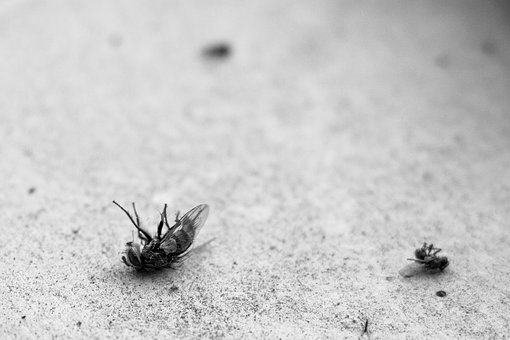 how to prevent flies in chicken coop