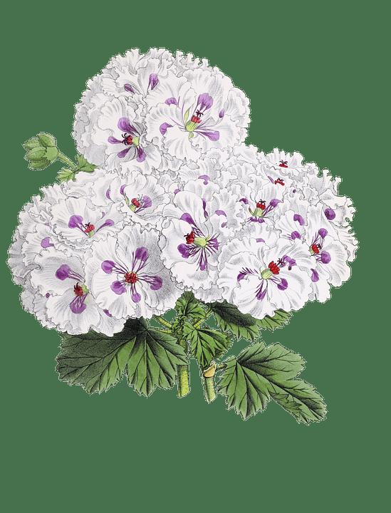 Falling Rose Petals Wallpaper Flower Plant Blossom 183 Free Image On Pixabay