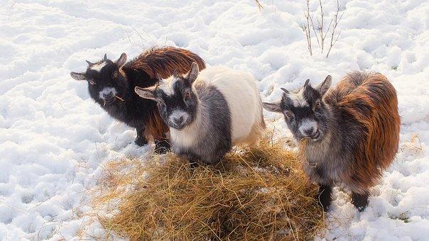 prepare farm for winter