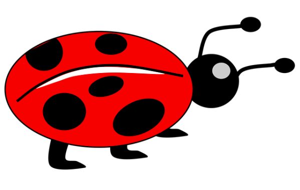 lady bug kids animal free vector