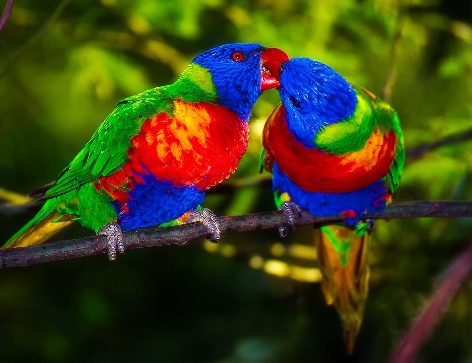 2 000 free parrot