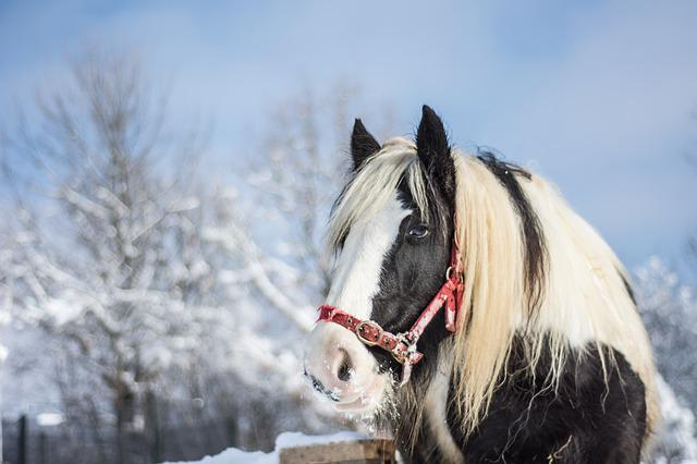 Vector Girl Wallpaper Hd Horse Winter Snow 183 Free Photo On Pixabay