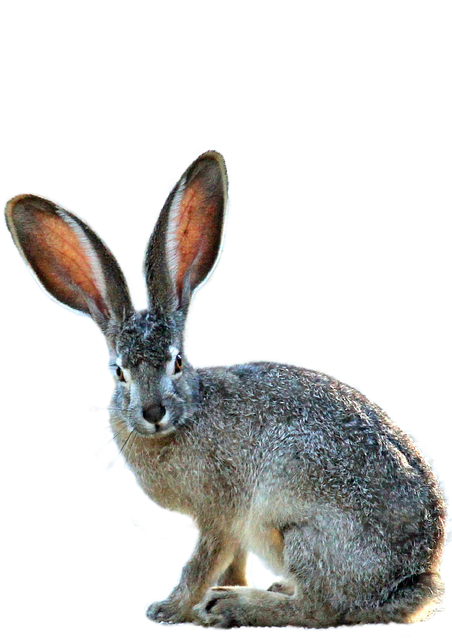 Free Fall Wallpaper With Animals Isolated Hare Nature 183 Free Photo On Pixabay