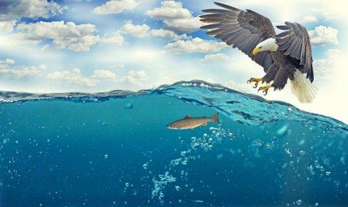 Seeadler, Adler, Weißkopfseeadler