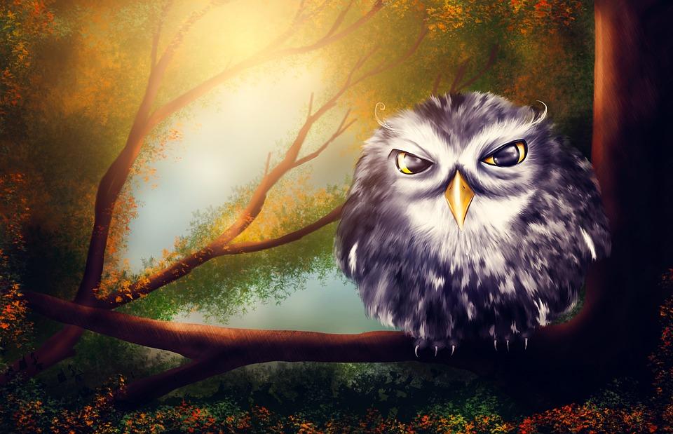 White Blue Wallpaper Hd Kostenlose Illustration Eule Vogel Wald Natur Muster