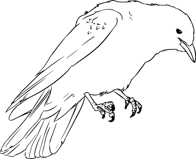 Jackdaw Crow Drawing · Free vector graphic on Pixabay