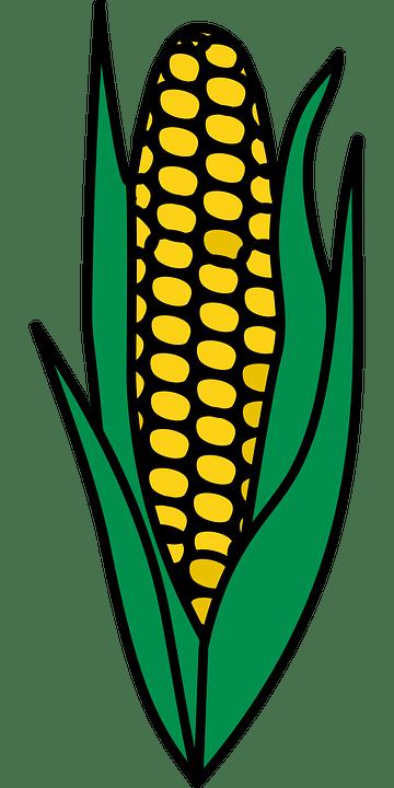 Gambar Sayuran Jagung : gambar, sayuran, jagung, Jagung, Makanan, Tanaman, Gambar, Vektor, Gratis, Pixabay