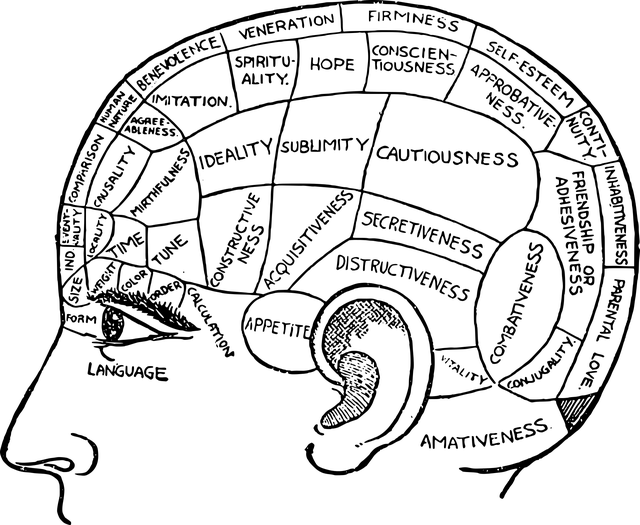 Brain Chart Diagram · Free vector graphic on Pixabay