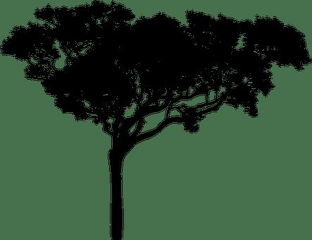 2 000 free trees