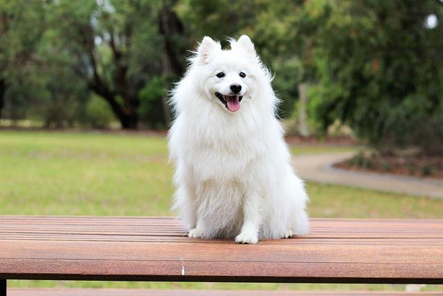 Cute Pomeranian Puppies Wallpaper Dog Puppy Spitz 183 Free Photo On Pixabay