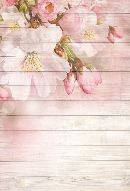 On Wood Cherry Blossom Pink Free Image On Pixabay