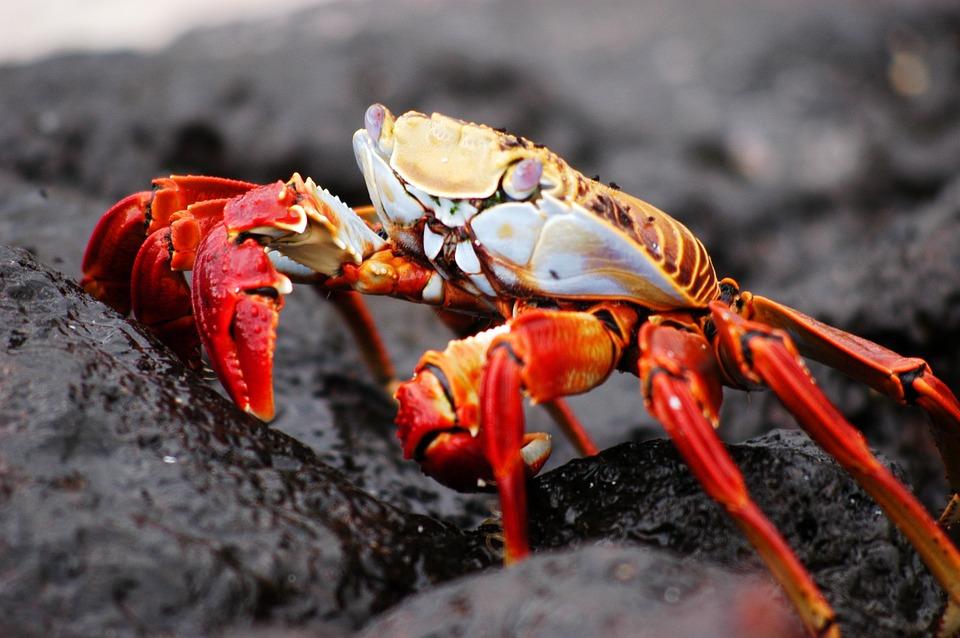 National Geographic Fall Wallpaper Crab Galapagos Nature 183 Free Photo On Pixabay