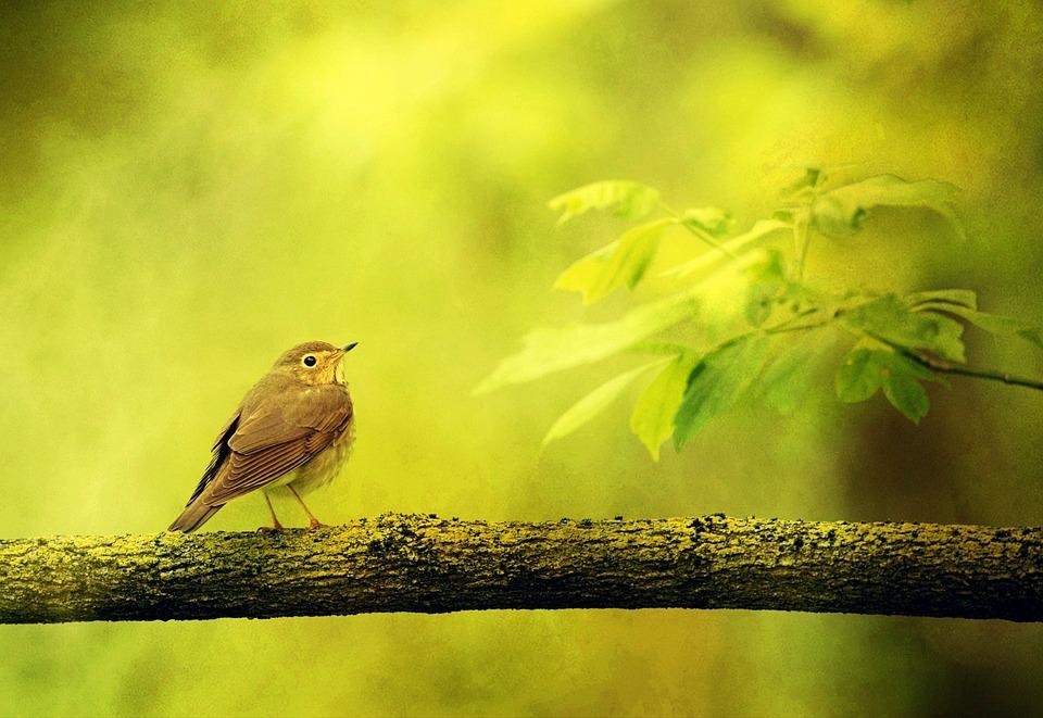background texture bird free