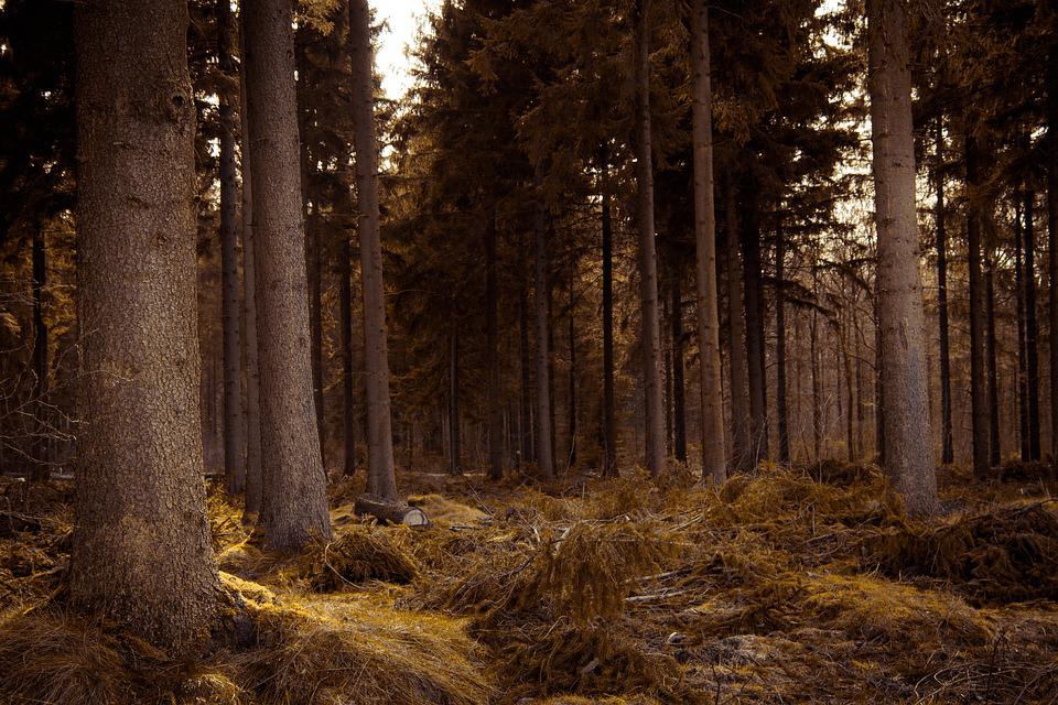 Fall Landscape Free Wallpaper Golden Forest Fantasy 183 Free Photo On Pixabay